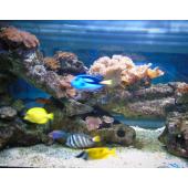 Monmar Aquarium